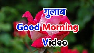 Good Morning Video || गुलाब🌹गुड मॉर्निंग शायरी || Good morning shayari sms wishes video