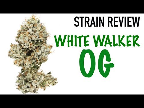 WHITEWALKER OG STRAIN REVIEW