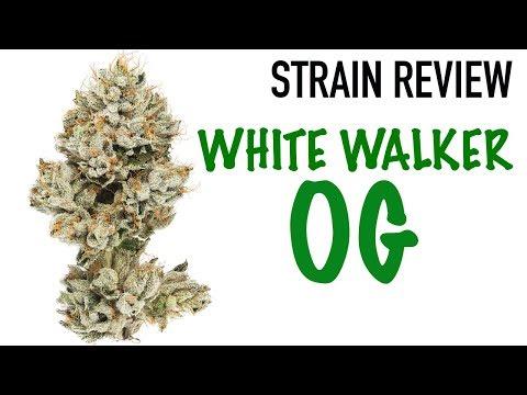 WHITEWALKER OG STRAIN REVIEW
