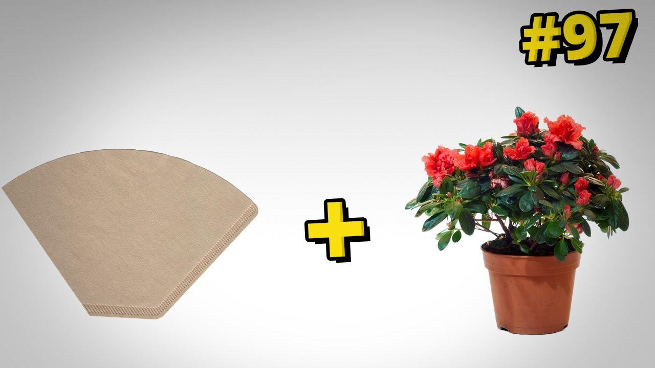 Jak zrobić doniczkowy filtr