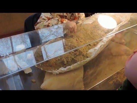 Burke Museum Dino Day 2016 part 3