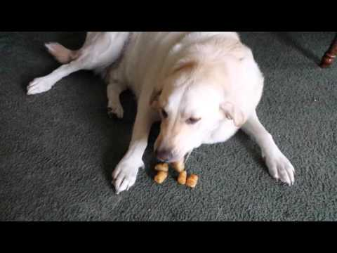 Dog Hides Tater Tots in Mouth