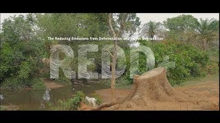 Engaging Communities in Forest Management and Bringing Sustainable Benefits in DRC