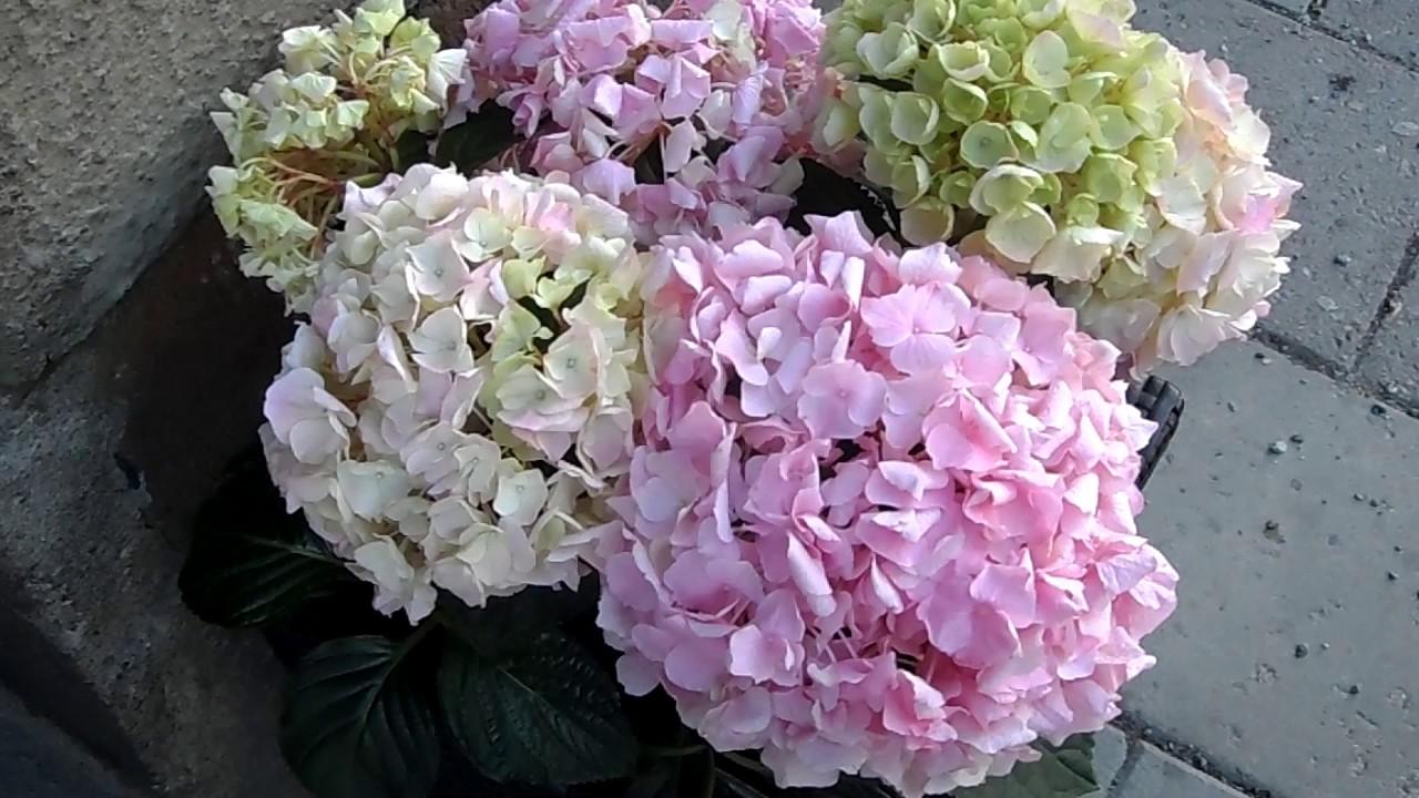 Fotos de flores preciosas plantas hermosas flores flores - Fotos flores preciosas ...