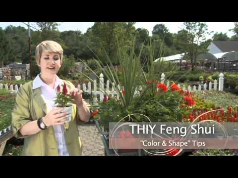 BetterTV Featured Television Spot - Dee Kelly Feng Shui