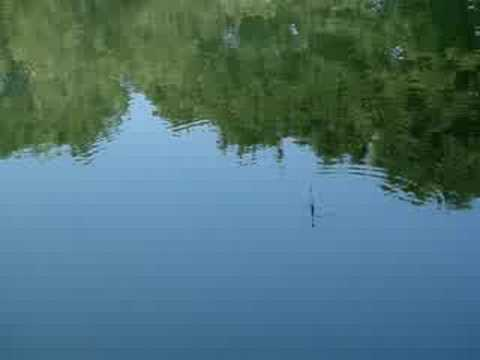 Float Fishing For Carp