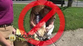 Service Animals K9 Etiquette