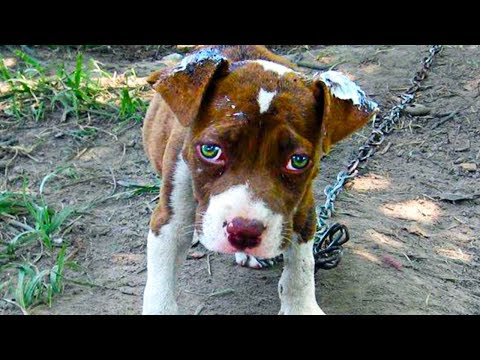 Dog Is Chained Outside For 15-Years, Until A Freak Accident Changes His Entire Life