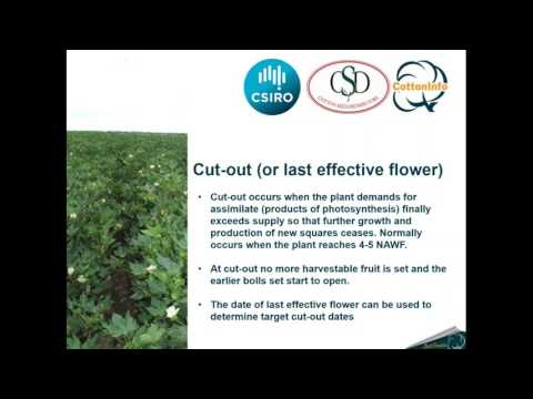 CottonInfo Webinar: Late season irrigation management