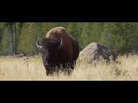 Land of Life: Greater Yellowstone
