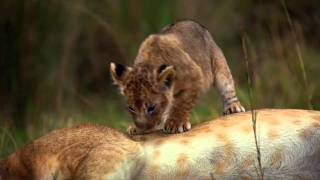 African Cats: Official Trailer 2