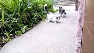 Котенок наелся и  стал играть с сосиской