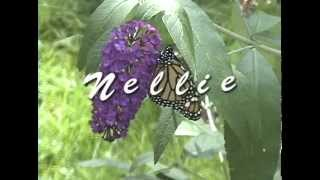 Nellie the Monarch Butterfly