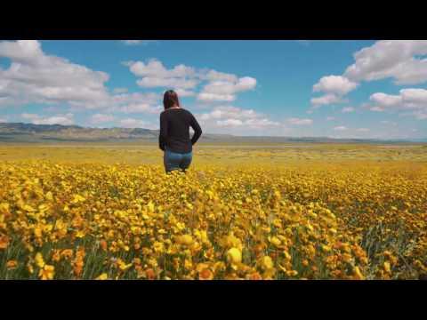 Carrizo Plains Super Bloom 2017 (4K)