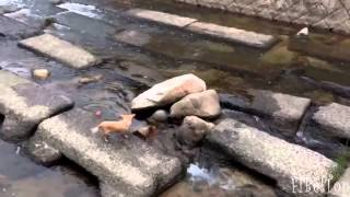 Смешное видео про животных!