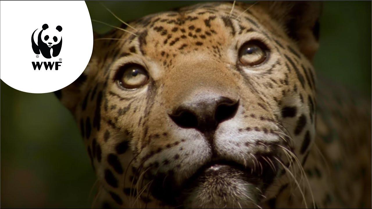 WNF commercial  De Amazone geeft ons leven   YouTube