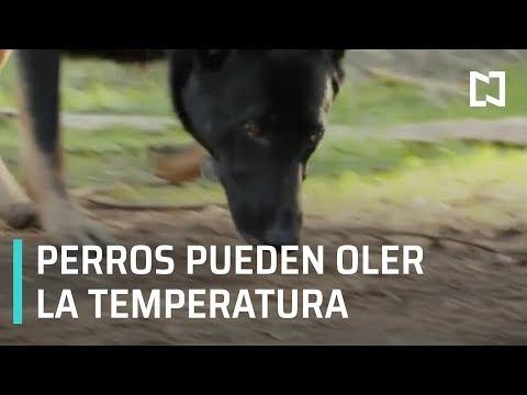 Perros pueden oler la temperatura - Las Noticias