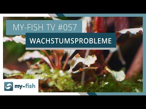 5 Gründe, warum deine Pflanzen im Aquarium nicht wachsen wollen | my-fish TV