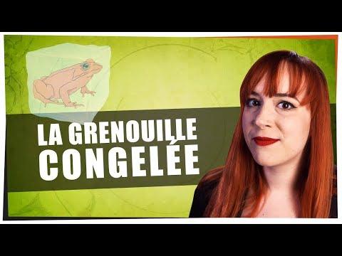 La Grenouille Congelée - Castor Mother #17 - String Theory