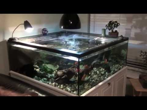 turtle tank sump and filter set up   youtube