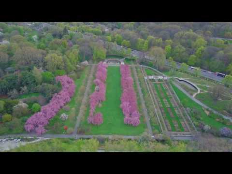Above New York: Cherry Blossoms at Brooklyn Botanic Garden