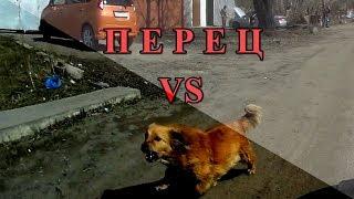 Перцовый баллончик Контроль УМ против Собак - 4., Перец. г.Омск Город глазами велосипедиста #144