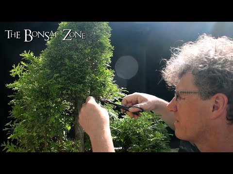 Avatar Grove, Bonsai Forest, Part 2, The Bonsai Zone, May 2018