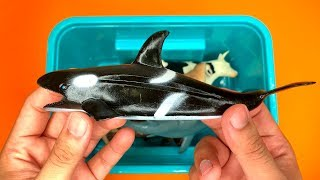 Tub Full of Sea and Barn Animals Learn Names with Orca Video for Kids