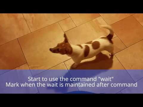 "Teaching the ""wait"" command"
