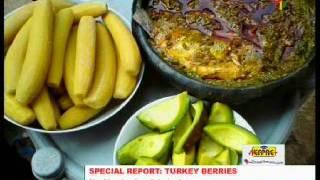 Turkey Berries: Nutritional & Medicinal Benefits