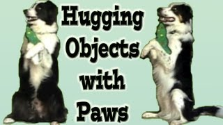 Hugging Objects With Paws - Dog Trick Training