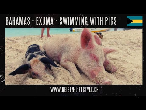 Swimming Pigs, Big Major Cay/Major Spot, Exuma, Bahamas, Barbara Blunschi, Reisen & Lifestyle