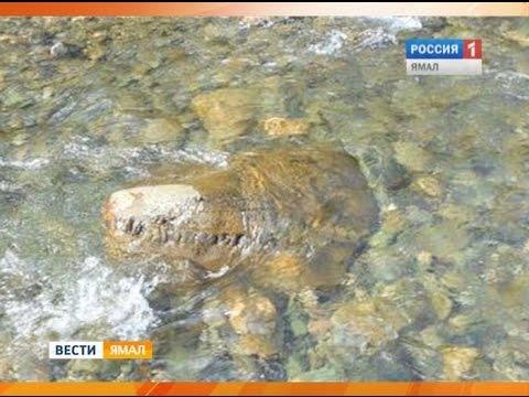Уральские туристы нашли на Ямале, предположительно, голову динозавра