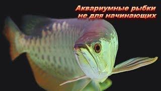 Аквариумные рыбки, которых не стоит заводить начинающим