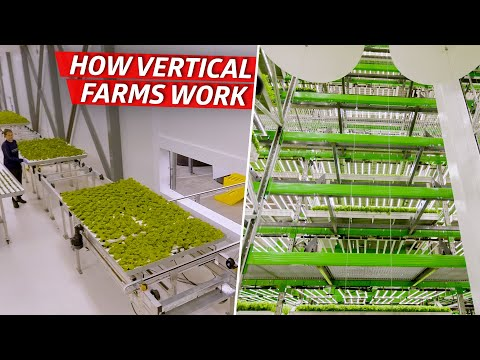 How an Indoor Farm Uses Technology to Grow 80,000 Pounds of Produce per Week  — Dan Does
