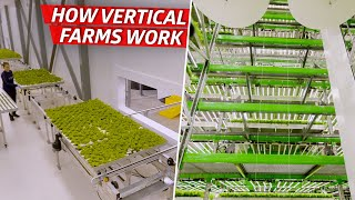 How an Indoor Farm Uses Technology to Grow 80,000 Pounds of Produce per Week  - Dan Does