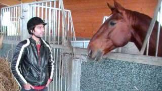 Nisar Stud Farm, Amer Nisar Khan, Racer Horses Photos, Horse Dancing in Pakistan