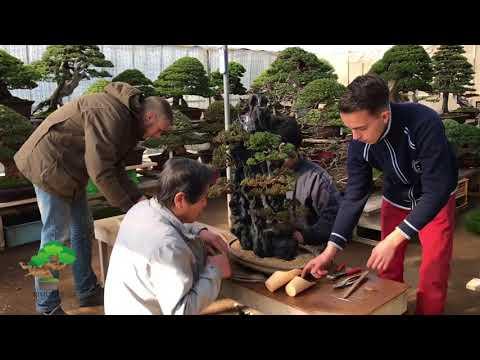 Putting rock planting bonsai into the pot by Masahiko Kimura