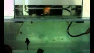 Open Bottom / Bottom Less Fish Tank / Aquarium Trial India