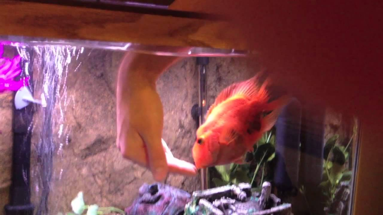Petting a Fish - Smartest Fish in the World- - YouTube