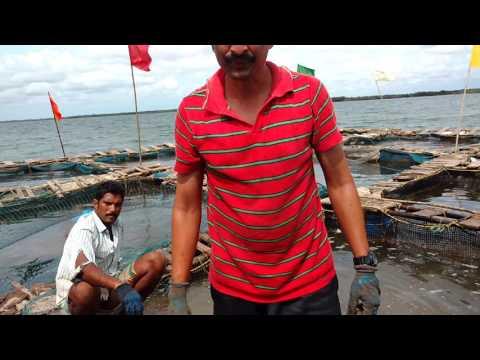 Sea Boss Fish Cage Culture Unit