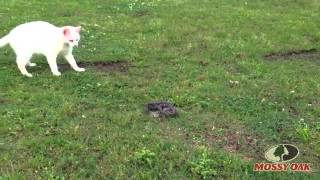 Кошачья реакция на укус змеи  .mp4