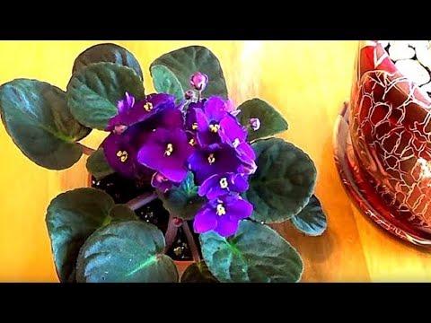 Как вывести мошку из комнатных растений