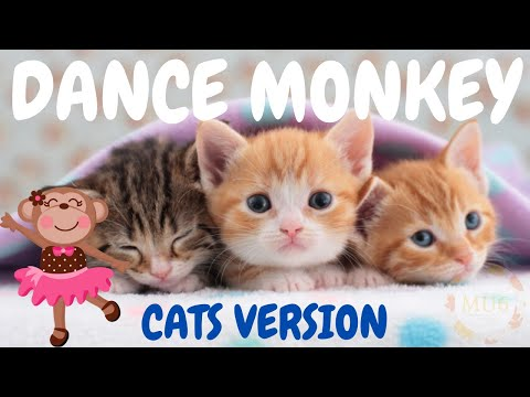 Cats Sing Dance Monkey by Tones & I | Cats Singing Song Parody