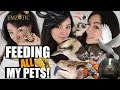FEEDING ALL MY PETS  - Feeding ALL my Animals in ONE video!