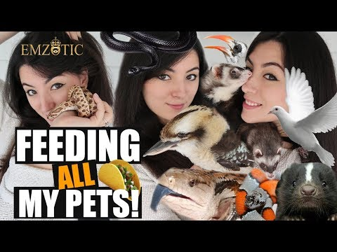 FEEDING ALL MY PETS  - Feeding ALL of my Pets in ONE video!