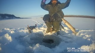 Catching pikes - evening bite of perch! Yakutia Russia Eng Subs