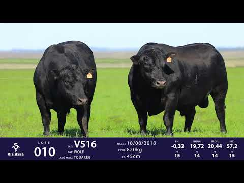 LOTE 10 - TAT V510 e V516
