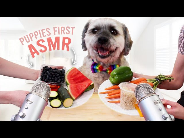 Puppy Tries ASMR For The First Time