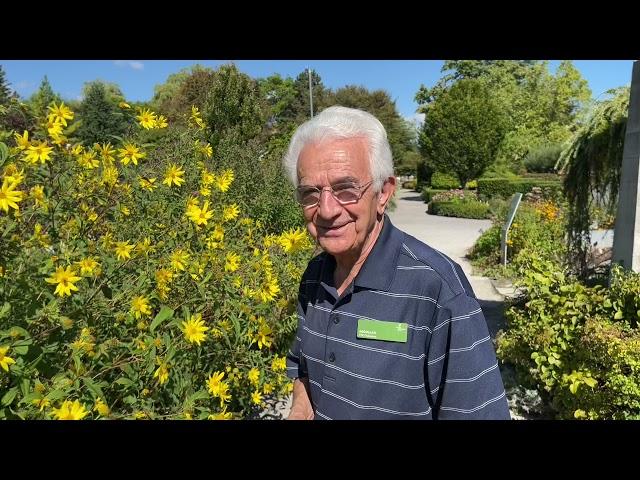 Plant Profile: Woodland Sunflowers